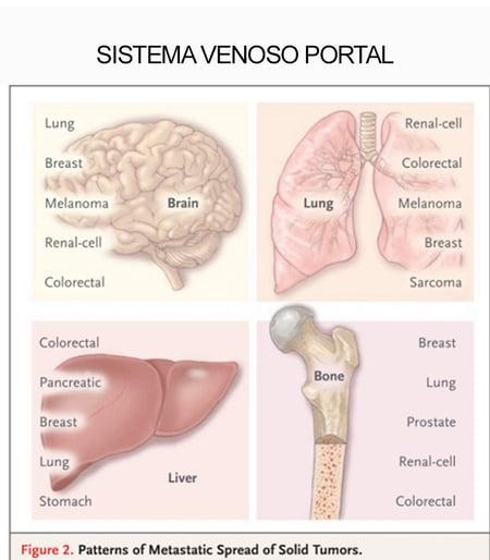 telerad_sistema_venoso_portal